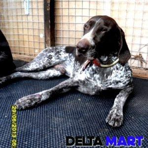 DOG KENNEL MAT